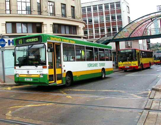 Yorkshire Terrier Dennis Dart Plaxton Pointer 103